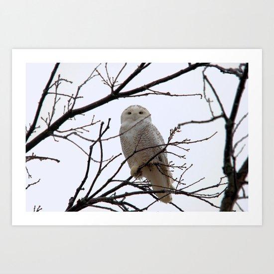 Snowy Owl in the Treetop by nancyacarter