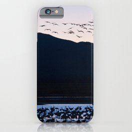 Sandhill Cranes At Whitewater Draw iPhone Case