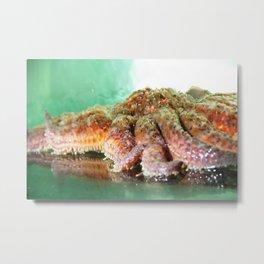 Sunflower Sea Star Metal Print