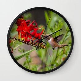 Rufous Hummingbird Feeding, No. 2 Wall Clock