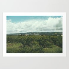 Vineyards, South of France Art Print