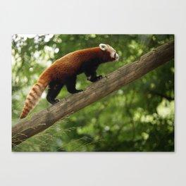 Happy Red Panda. Canvas Print