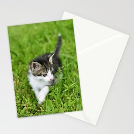 Kitten in the grass Stationery Cards