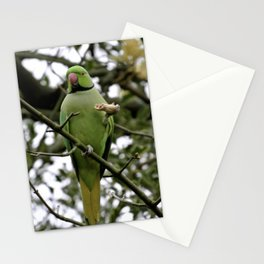 Parakeet Stationery Cards