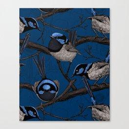 Night fairy wrens  Canvas Print