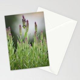 lavendula - II Stationery Cards