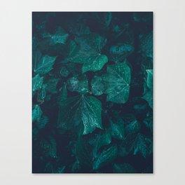 Dark emerald green ivy leaves water drops Canvas Print