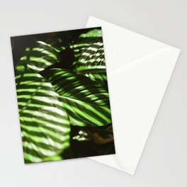 Afternoon Light on a Peace Lily Plant Stationery Cards