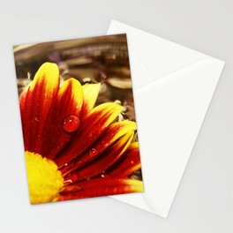 Floating Mum Nature / Floral / Botanical Photograph Stationery Cards