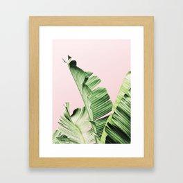 Banana Leaf on pink Framed Art Print