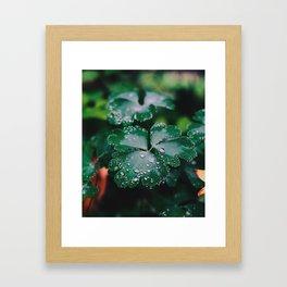 Leaves after rain Framed Art Print
