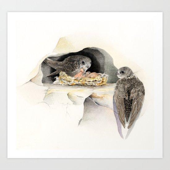 Swift - nesting bird on the Ligurian coast Art Print