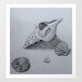 Sea Shell Pencil Drawing2 Art Print