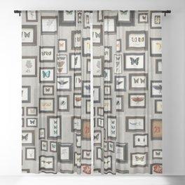 Osborne & Little Matthew Williamson Sheer Curtain