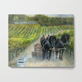 Grape Harvest Teamwork in the Vineyard Metal Print