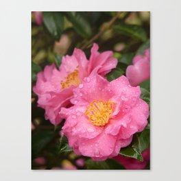 Beautiful camellia Canvas Print