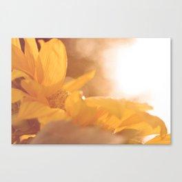 Sun Flare Sunflower Canvas Print