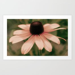 Soft Delicate Pink Daisy Art Print