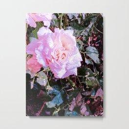 Pink Rose of Summer Metal Print