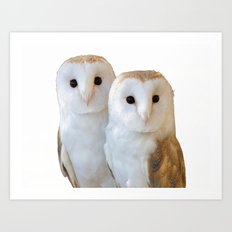 two owls friends Art Print