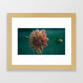 // you're showing your color, like a setting sun Framed Art Print