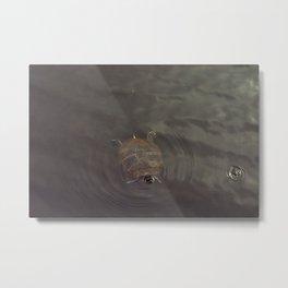 Hey Turtle Metal Print
