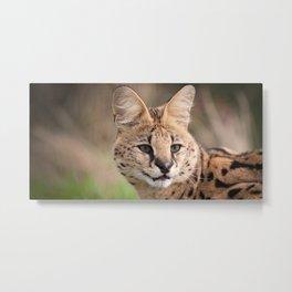 Serval Cat Metal Print