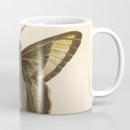 Antique Curius Butterfly Lithograph Coffee Mug