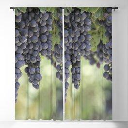 black grape grows on vineyard Blackout Curtain