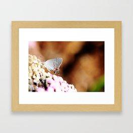 Gray Hairstreak Butterfly Framed Art Print