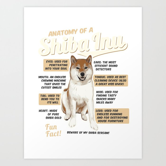 Anatomy Of A Shiba Inu Art Print By Teeign Society6