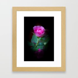 Wet Pink Rose Framed Art Print
