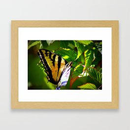 Butterfly- close and personal Framed Art Print