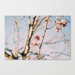 Winer Bloom Canvas Print