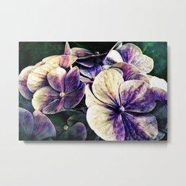 Hortensia flowers in vintage grunge watercoloring style Metal Print