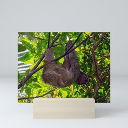 Happy Sloth hanging in a tree Mini Art Print