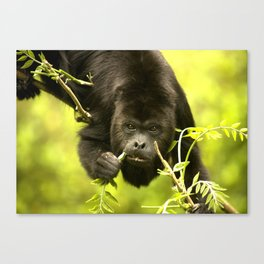 Howler monkey Canvas Print