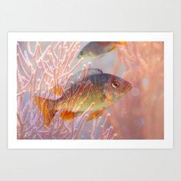 Love is a Fish Art Print