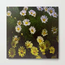 Field of Daisies by Aloha Kea Photography Metal Print