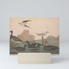 Brant Scoter Duck Velvet Duck Harlewuin Duck Ducky Duck Marsh Tern Sooty Tern13 Mini Art Print