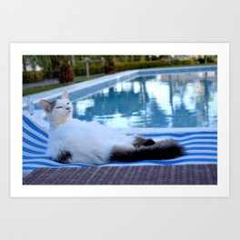 Cat resting on long chair by the pool Art Print