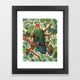 Tipsy Turaco Framed Art Print