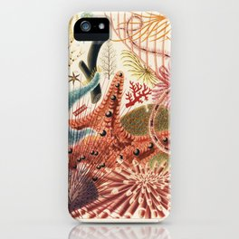 Great Barrier Reef Echinoderms from The Great Barrier Reef of Australia (1893) by William Saville-Ke iPhone Case