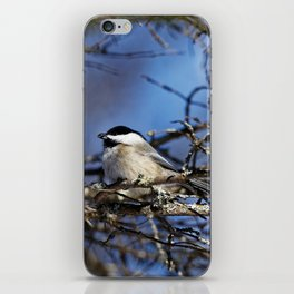 Black-capped Chickadee Holding a Seed iPhone Skin