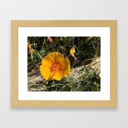Meadow Wildflower Framed Art Print