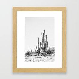 DESERT CACTUS XVII / Baja, Mexico Framed Art Print