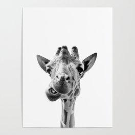Giraffe Portrait Black and White Poster