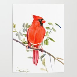 Cardinal Bird homde decor Poster