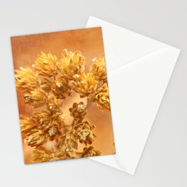 Last autumn flowers Stationery Cards