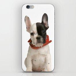 Boston Terrier Puppy iPhone Skin